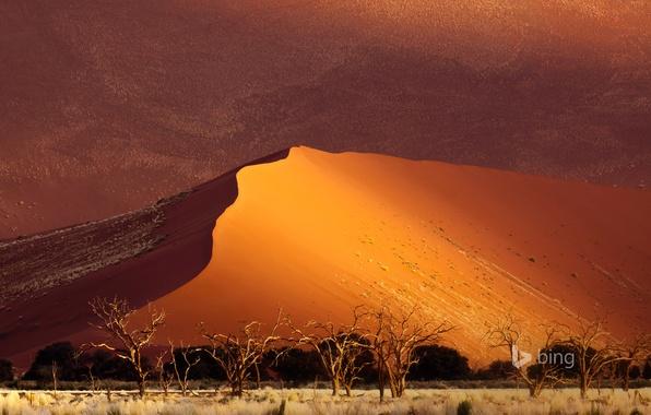 Картинка песок, деревья, пустыня, дюны, Африка, Намибия, Sossusvlei