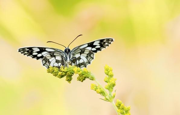 Фото растение цветок желтый бабочка