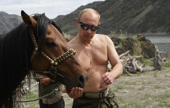 Картинка горы, природа, обои, лошадь, путин, владимир путин, премьер-министр россии, президент россии