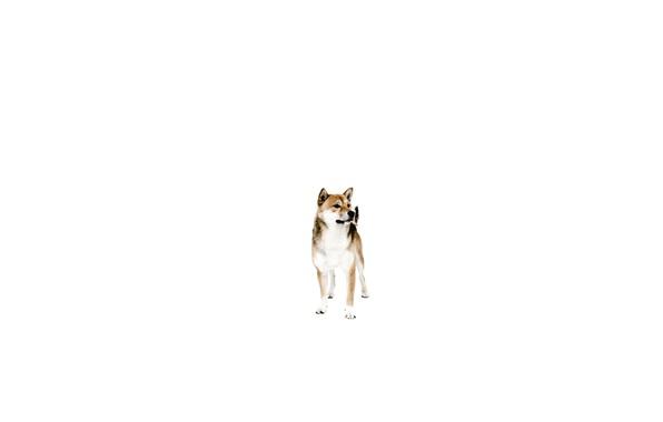 Картинка друг, собака, минимализм, пёс