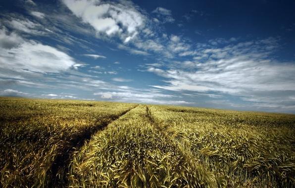 Картинка дорога, поле, лето, небо