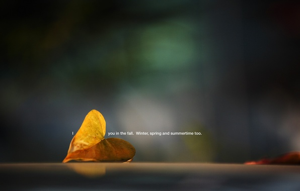 Картинка макро, лист, фото, фон, надпись, обои, растение, картинка, опавший, i you in the fall. winter, …