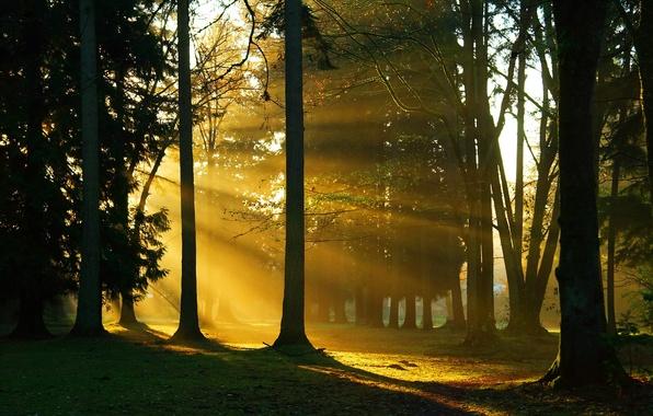 Картинка лес, деревья, ветки, природа, стволы, солнечный свет