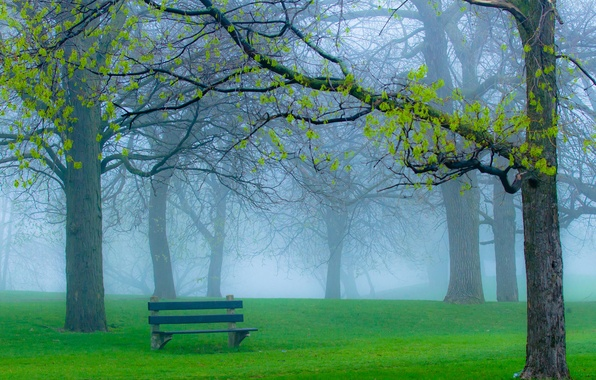 Картинка трава, ветки, природа, туман, парк, весна