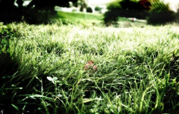 Картинка зелень, трава, свежесть, природа, роса
