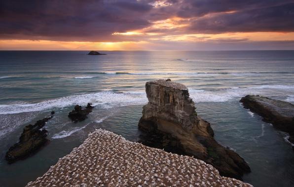 Картинка море, небо, вода, закат, птицы, скалы, берег, Новая Зеландия