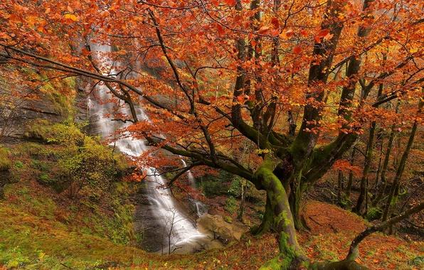 Картинка осень, лес, деревья, водопад, Испания, Spain, Bizkaia, Бискайя, Страна Басков, Basque Country, Uguna Waterfall, Природный …