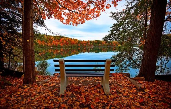 Картинка осень, лес, небо, листья, вода, деревья, скамейка, природа, отражение, река, вид, hdr, прогулка, forest, river, …