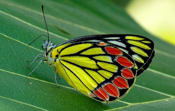 Картинка природа, лист, бабочка, насекомое, мотылек