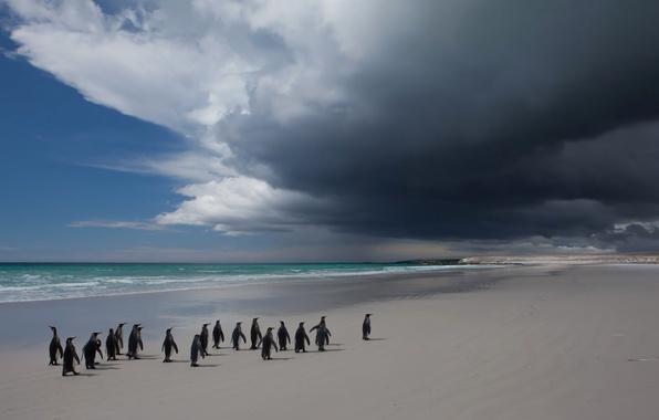 Картинка море, небо, облака, пейзаж, птица, пингвины
