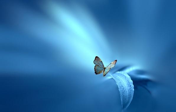 Картинка цветок, лист, стиль, фон, голубой, бабочка, Josep Sumalla