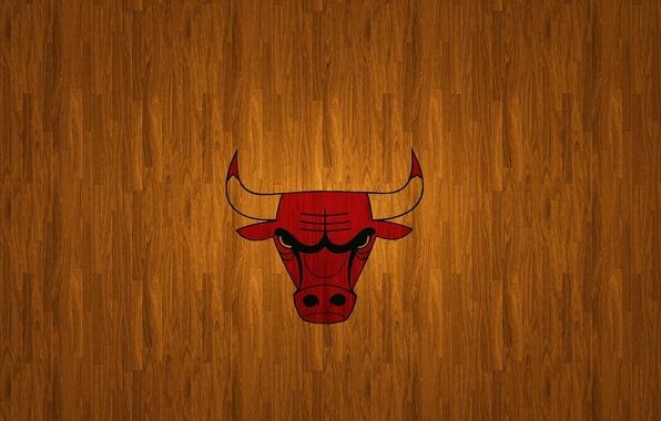 Чикаго буллз бык 3