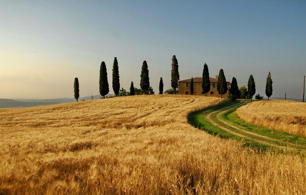 Картинка пшеница, поле, осень, небо, деревья, природа, дерево, пейзажи, поля, дома, италия, таскания