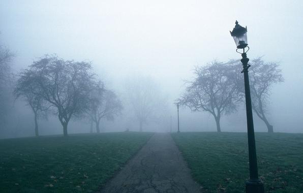 Картинка деревья, туман, тропа, фонарь
