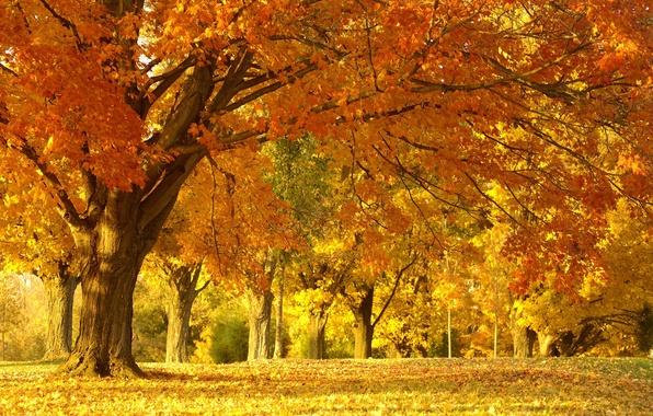 Картинка осень, лес, деревья, пейзаж, природа, парк, листва, красота