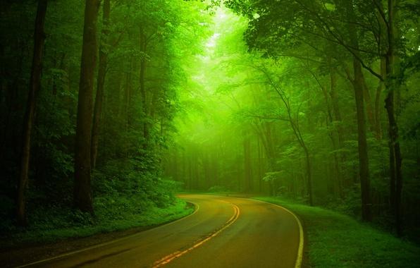 Картинка дорога, лес, деревья, природа, парк, весна, forest, road, trees, nature, park, spring, walk, path