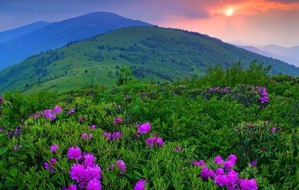 Картинка небо, трава, деревья, пейзаж, закат, цветы, горы, природа, облаках