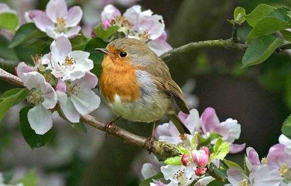 весна обои цветы: