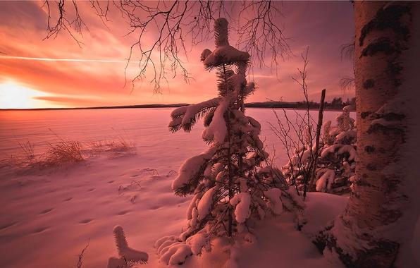 Картинка зима, небо, облака, снег, закат, дерево