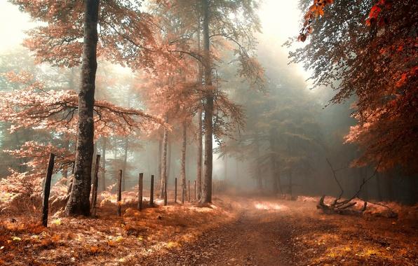 Картинка дорога, осень, лес, туман, ограда
