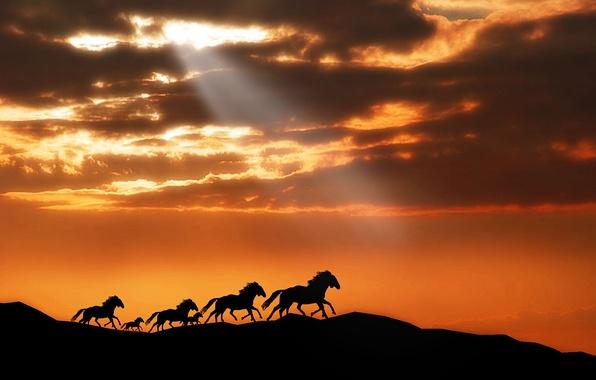 Картинка животные, небо, солнце, облака, лучи, свет, закат, горы, конь, лошадь, лошади, пони, табун, horse