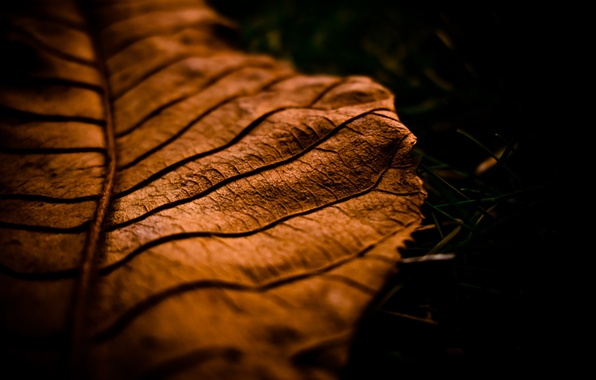 Картинка осень, макро, лист, autumn, macro leaf
