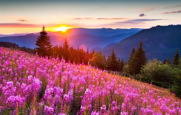Картинка лес, лето, свет, цветы, горы, природа, фото, позитив, красиво, солнца