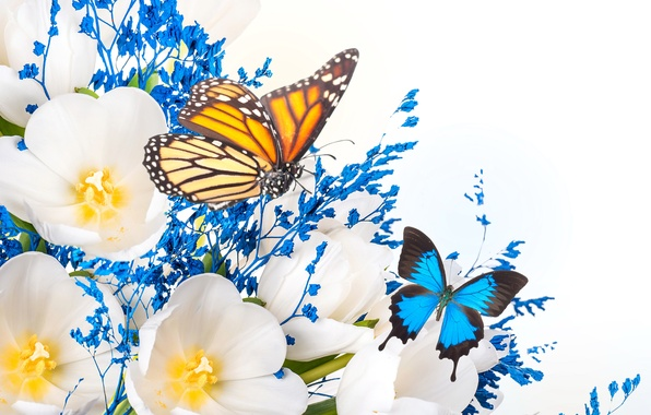 Картинка цветы, коллаж, бабочка, крылья, лепестки, тюльпаны
