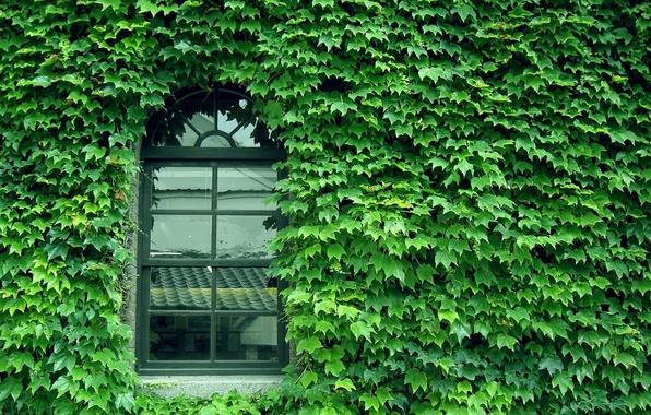 Картинка green, glass, wall, pattern, window
