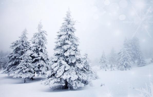Картинка зима, снег, деревья, пейзаж, снежинки, природа, фон, елки, ели, ёлки, боке