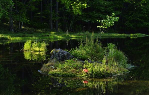 Картинка лес, лето, трава, деревья, река