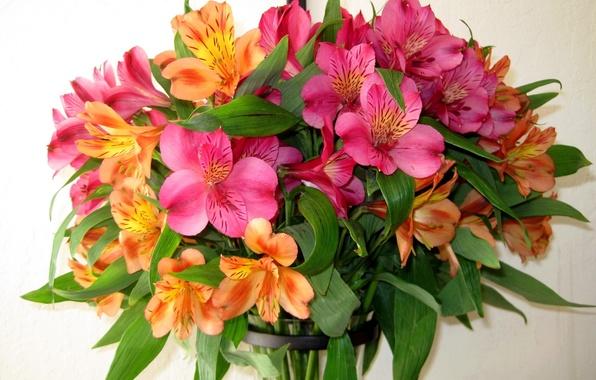 Картинка цветок, природа, фото, Цветы, букет, альстрёмерия