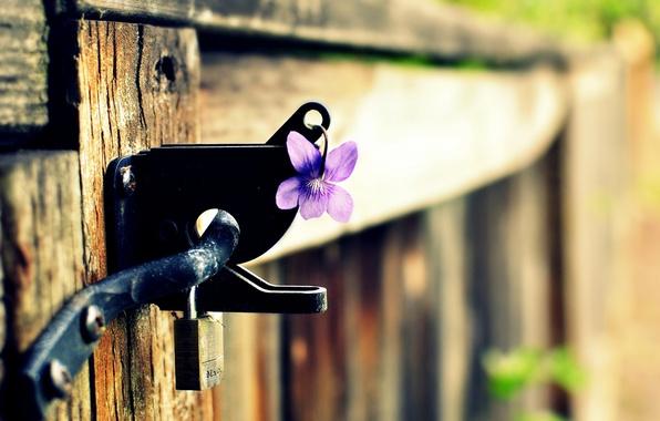 Картинка цветок, фиолетовый, макро, фон, замок, widescreen, обои, забор, размытие, ворота, wallpaper, широкоформатные, background, полноэкранные, HD …