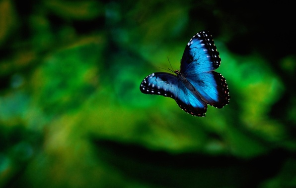 Картинка зелень, фон, бабочка, насекомое
