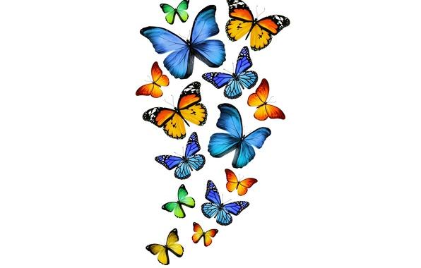 Картинка бабочки, green, желтые, зеленые, синие, yellow, blue, butterflies