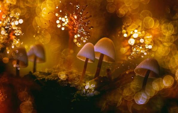 Картинка макро, свет, роса, блики, тепло, мир, грибы, мох, боке, лишайники