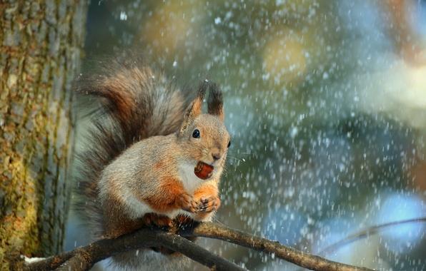 priroda-zima-sneg-derevo-3752.jpg