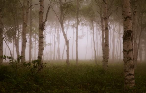 Картинка лес, деревья, ветки, туман, forest, trees, fog, branches