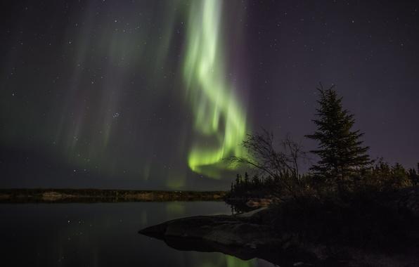 Картинка лес, небо, звезды, ночь, берег, северное сияние, панорама, Aurora Borealis