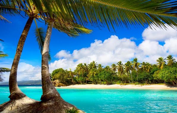 Картинка море, пляж, тропики, пальмы, summer, beach, sea, ocean, paradise, vacation, palms, tropical