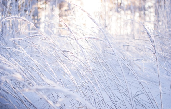 Картинка зима, лес, трава, свет, снег, деревья, природа, красота, Morgendorffer
