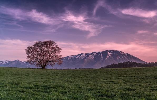 Картинка поле, небо, трава, облака, дерево, Горы, вечер, розовое