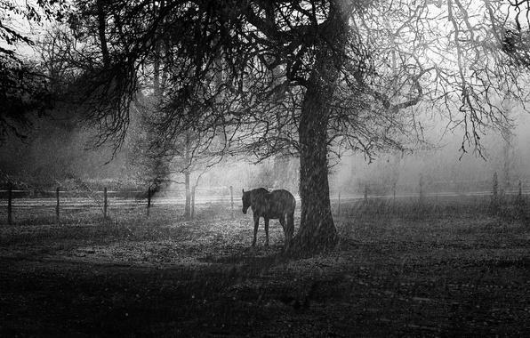 Картинка дождь, дерево, конь