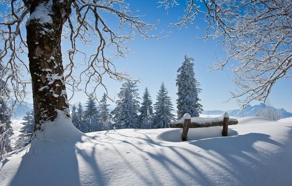 Картинка зима, снег, пейзаж, дерево, красота, скамья