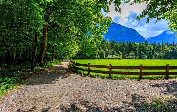 Картинка дорога, лес, деревья, природа, парк, весна, forest, road, sky, trees, landscape, nature, park, clouds, scenery, …