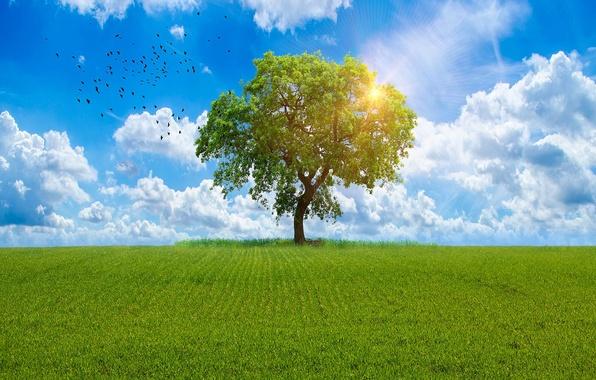 Картинка зелень, поле, лето, небо, трава, солнце, облака, птицы, дерево