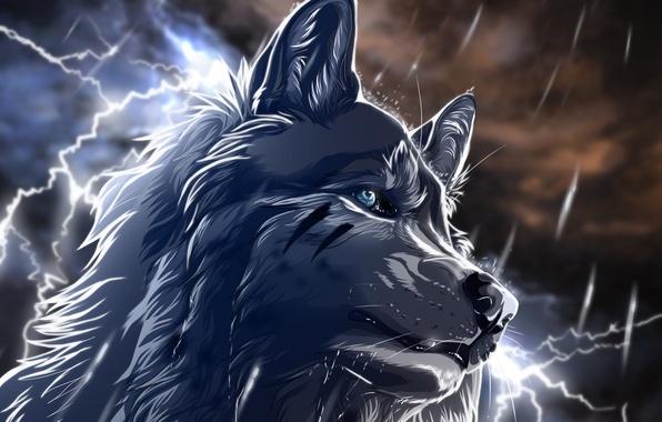 Картинка ночь, дождь, молнии, Волк, art, wolfroad