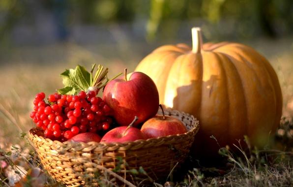 Яблоки фото натюрморт
