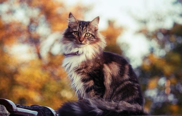 Картинка кошка, кот, блики, фон, котик, кошак, киса, смотрит, котяра, котэ, кисуля
