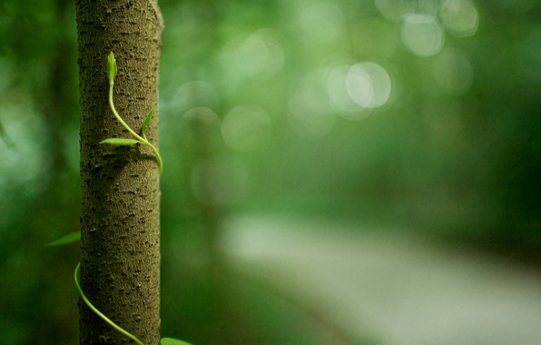 Картинка зелень, лес, макро, деревья, природа, жизнь, green, листва, растения, ствол, кора, forest, life, macro photos, ...